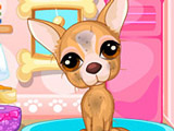 Игра Собаки: Уход за Чихуахуа